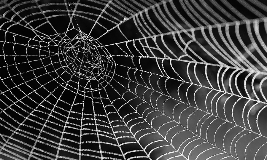 Spider webs as computers